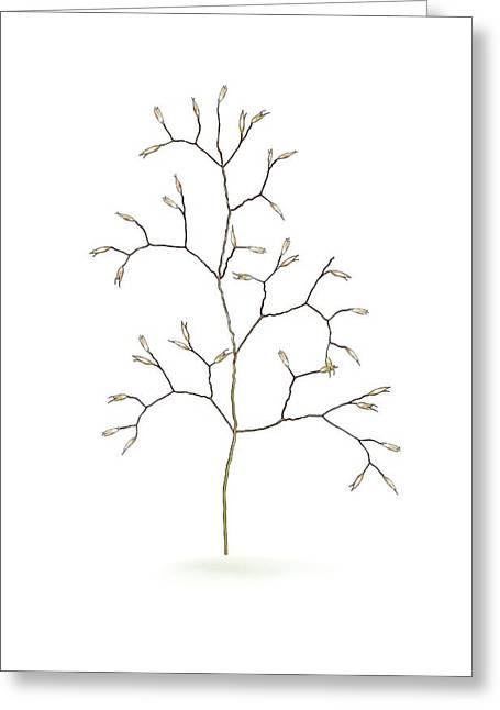 Wavy Hair-grass (deschampsia Flexuosa) Greeting Card by Mikkel Juul Jensen