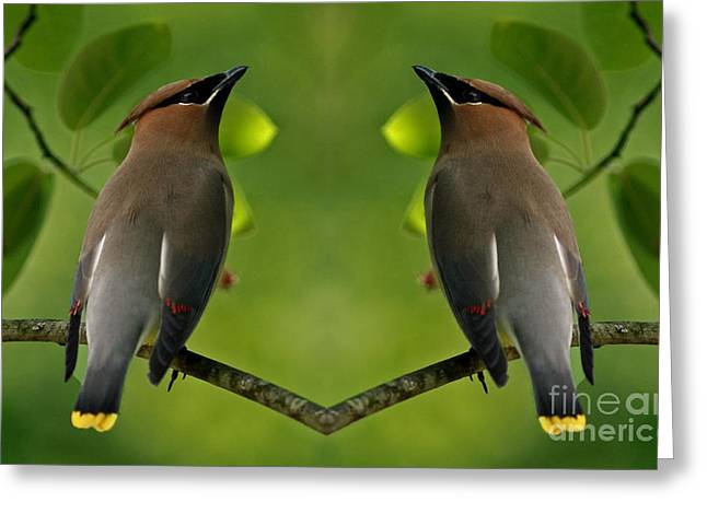 Waxwing Love Greeting Card by Inspired Nature Photography Fine Art Photography