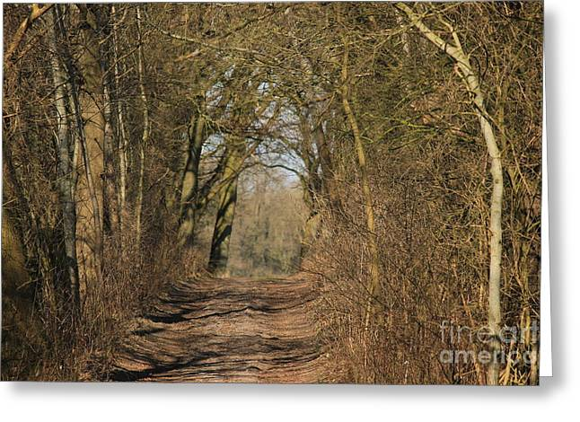 Way Of Nature Greeting Card by Four Hands Art