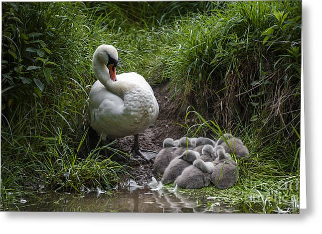 We All Here Mum Greeting Card by Svetlana Sewell