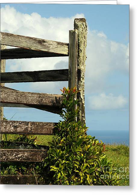 Weathered Fence Greeting Card by Vivian Christopher