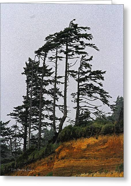 Weathered Fir Tree Above The Ocean Greeting Card by Tom Janca