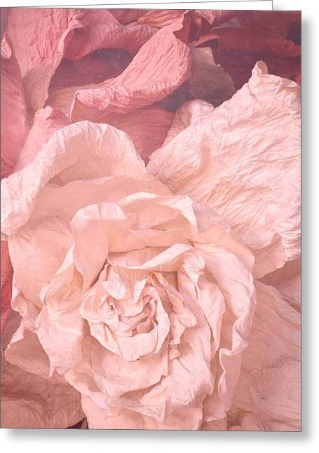 Weathered Roses Greeting Card by Regina Avila