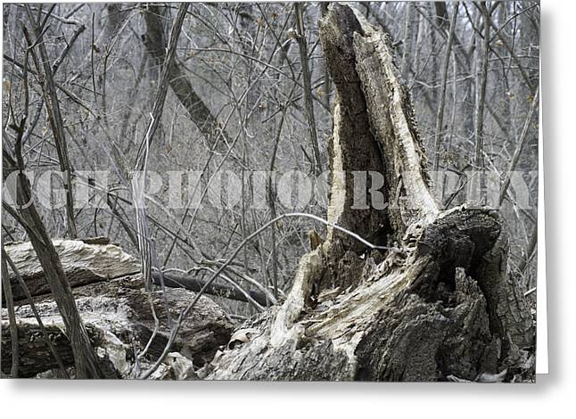 Weathered Wood Greeting Card by Caralee White