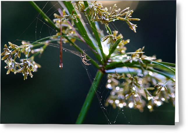 Web After The Rain Greeting Card by Adria Trail