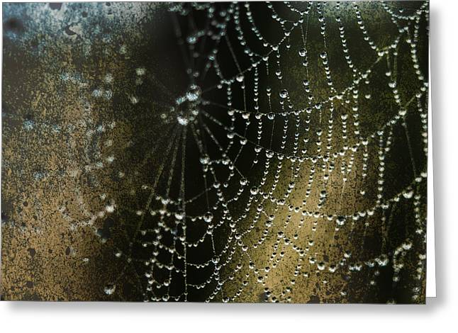 Web In The Mist Greeting Card