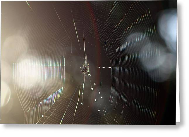 Greeting Card featuring the photograph Web Of Flares by Greg Allore