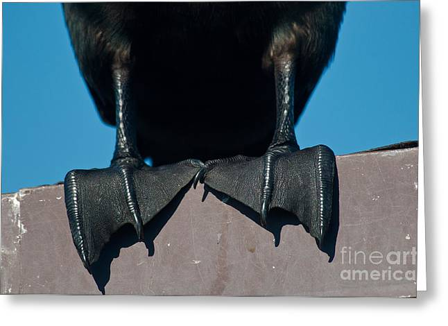 Webbed Feet Of A Cormorant Greeting Card