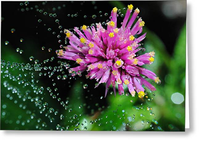 Webbed Water Droplets Greeting Card by Kelly Nowak