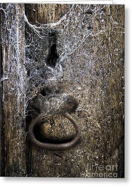 Webs Greeting Card by Margie Hurwich