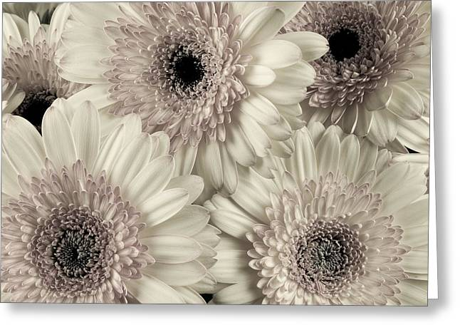Wedding Bouquet -gerbera Duotone Greeting Card