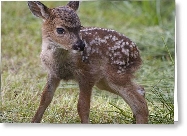 Wee Little Bambi Greeting Card by Tracey Levine
