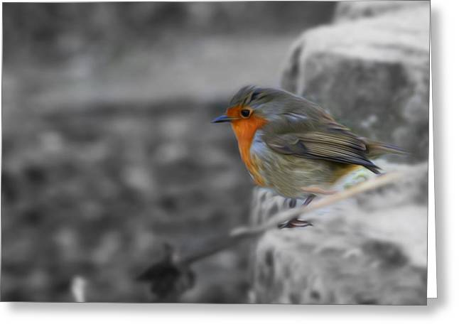Wee Robin Greeting Card