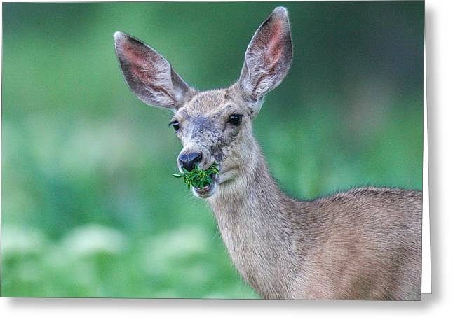 Weed Deer Greeting Card