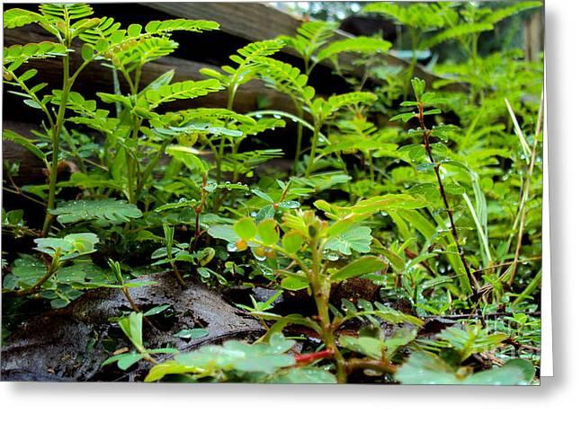 Weeds 1 Greeting Card by Cheryl Raber