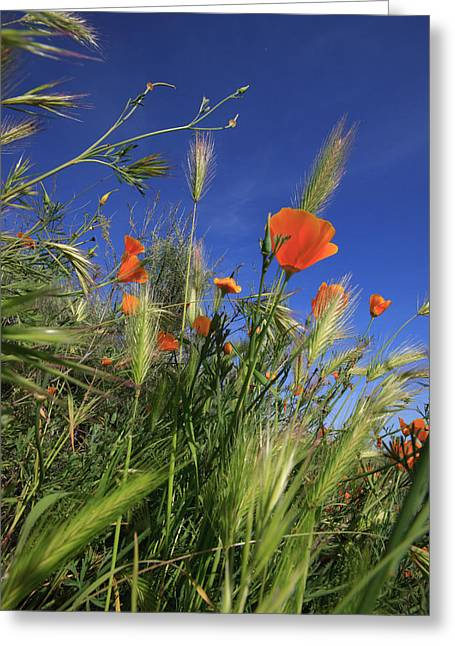 Weeds And Poppies From Worms-view Greeting Card by Tom Norring