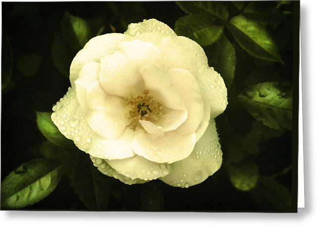 Weeping Camelia Greeting Card