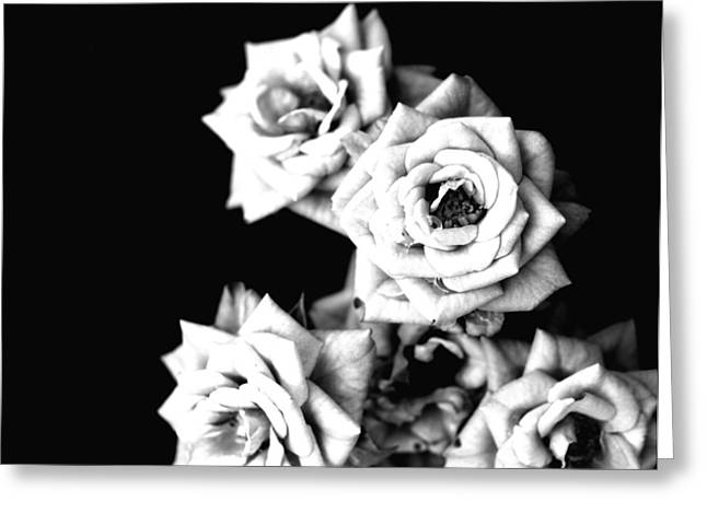 Greeting Card featuring the photograph Weeping Roses by Rachel Mirror