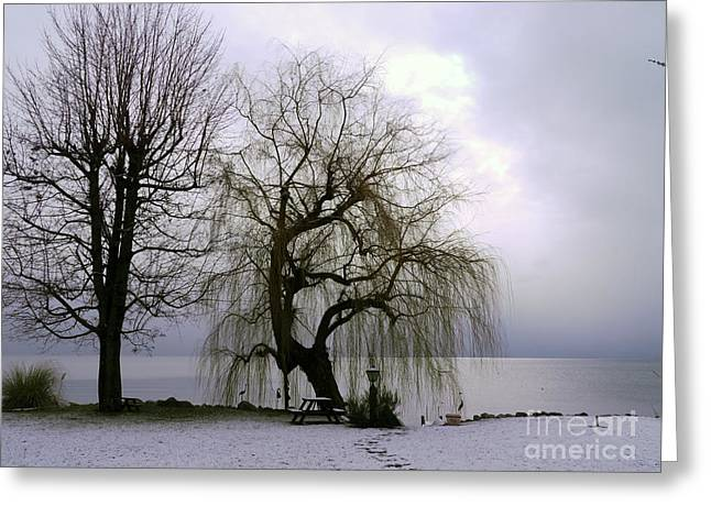 Weeping Willow By Lake Geneva Greeting Card by Adam Sylvester