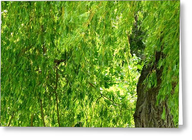 Weeping Willow Green Greeting Card by Will Borden