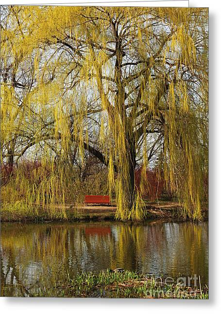 Weeping Willow  Greeting Card by Isabel Poulin
