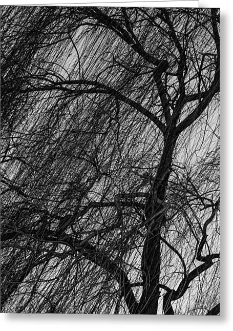 Weeping Willow Greeting Card by Robert Hebert