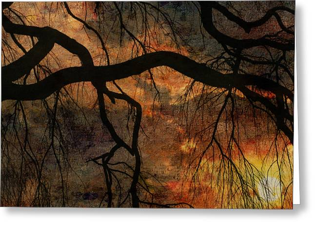 Weeping Willow Sunset Greeting Card by Bruce Rolff