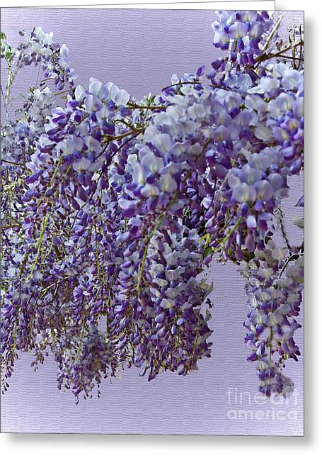 Weeping Wisteria Greeting Card