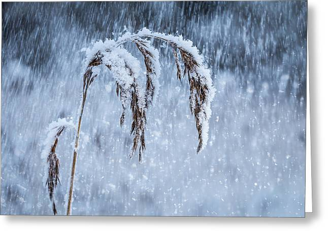 Weight Of Winter Greeting Card by Janne Mankinen