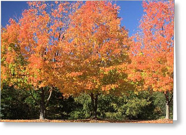 Greeting Card featuring the photograph Welcome Autumn by Gordon Elwell