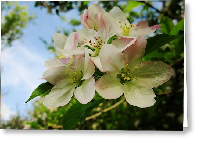Welcome Blossoms Greeting Card