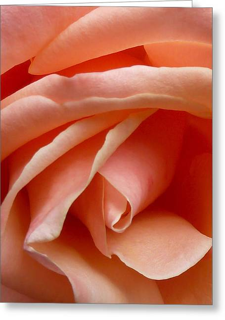Welcome Rose Greeting Card