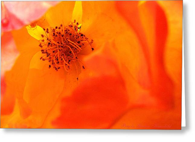 Greeting Card featuring the photograph Welcome To My World by Brooks Garten Hauschild