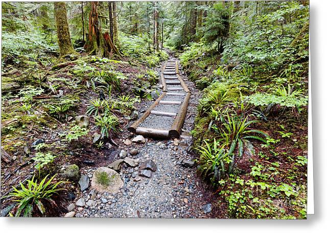 Welcome To The Forest - We Got Pines And Ferns - Washington State Greeting Card by Silvio Ligutti