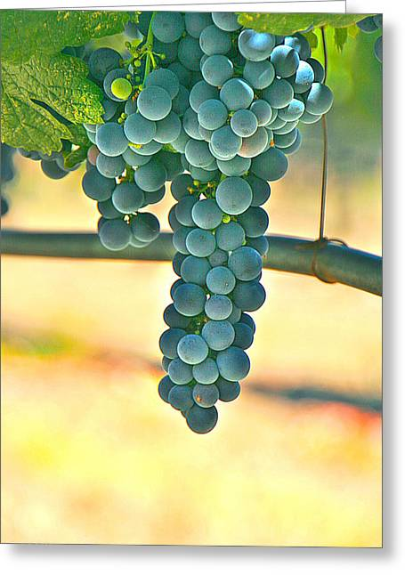 Well Hung Vine Greeting Card by Lorella  Schoales