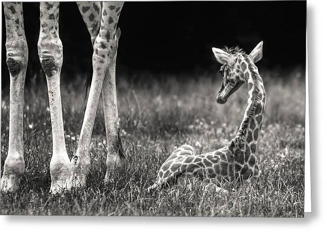 Well Protected Greeting Card by Andreas Feldtkeller