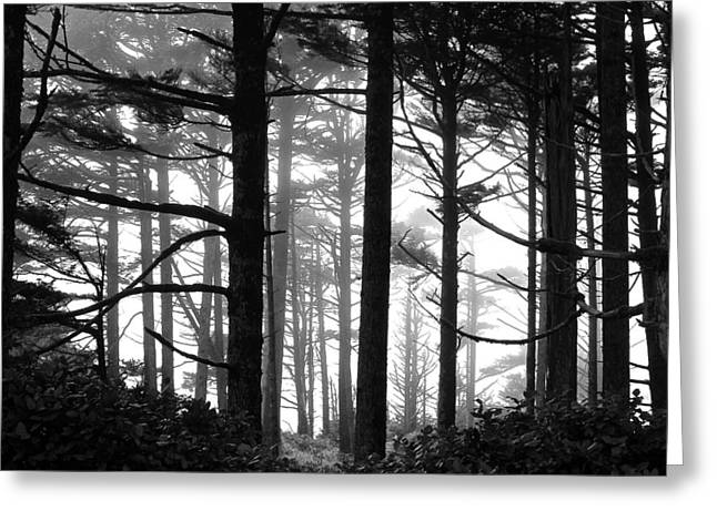 West Coast Trees Greeting Card by Brian Sereda