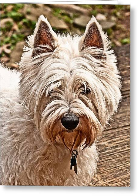 Greeting Card featuring the photograph West Highland White Terrier by Robert L Jackson