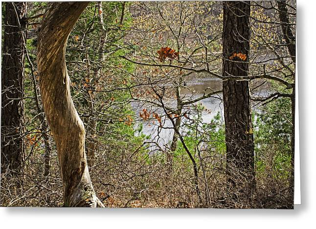 West Pond In The Woods Greeting Card by Frank Winters