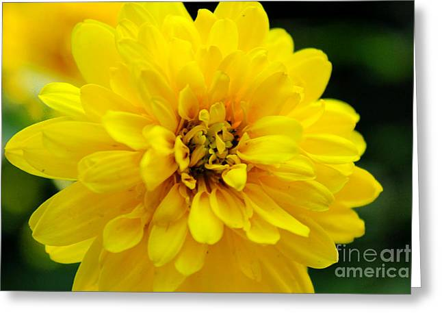West Virginia Marigold Greeting Card