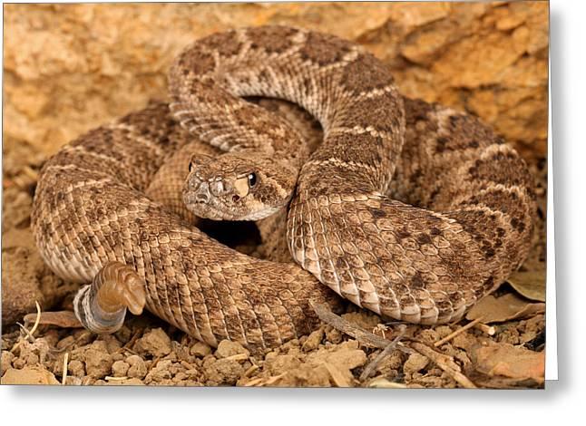 Western Diamondback Rattlesnake. Greeting Card by John Bell