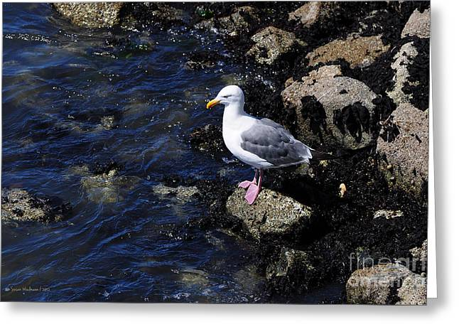 Western Gull On Rocks Greeting Card