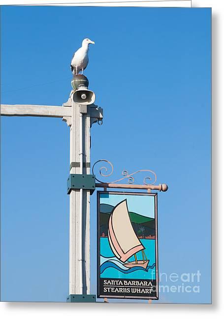 Western Gull - Stearns Wharf Santa Barbara California Greeting Card