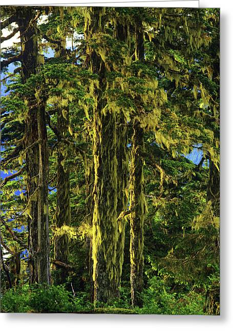Western Hemlock And Lichen, Temperate Greeting Card by Howie Garber