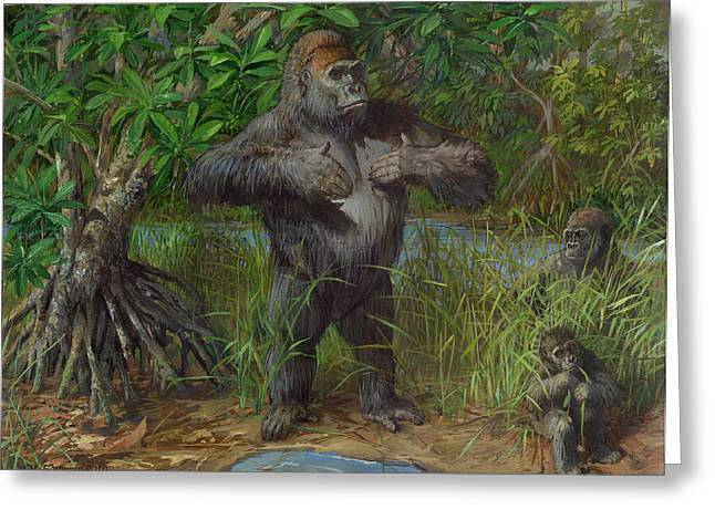 Western Lowland Gorilla Greeting Card by ACE Coinage painting by Michael Rothman