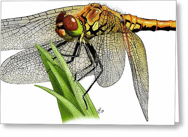 Western Meadowhawk Dragonfly Greeting Card by Roger Hall