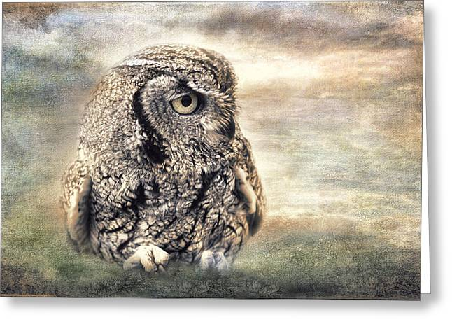 Western Screech Owl Greeting Card