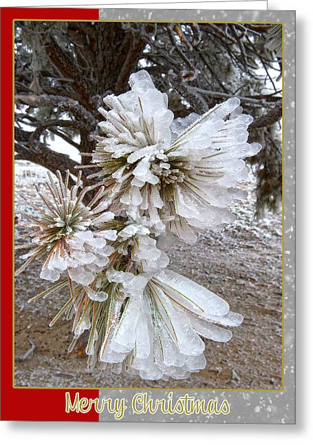 Western Themed Christmas Card Pine Needles And Ice Greeting Card