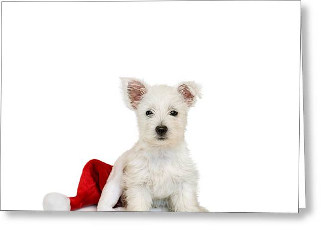 Westie Puppy And Santa Hat Greeting Card by Natalie Kinnear