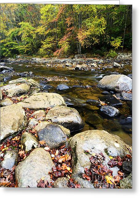 Wet Autumn Day Greeting Card by Thomas R Fletcher